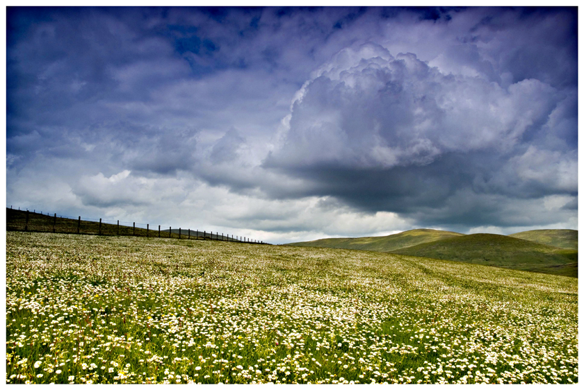 Daisy Field by pmd1138