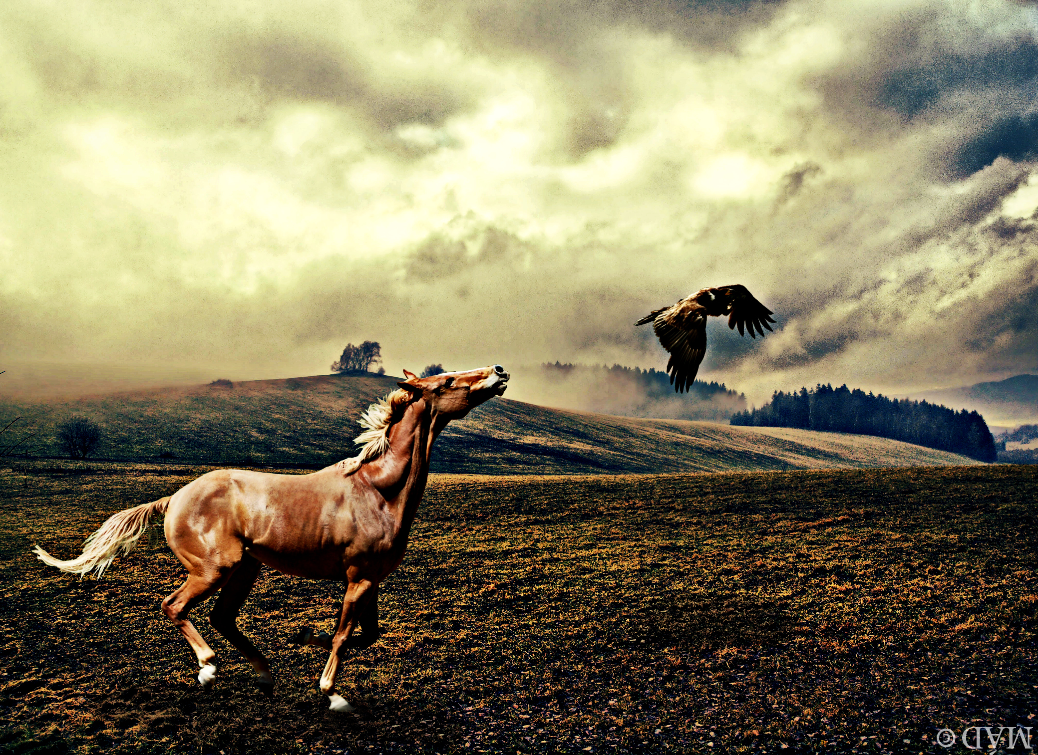 Pursuit. by Meadhag