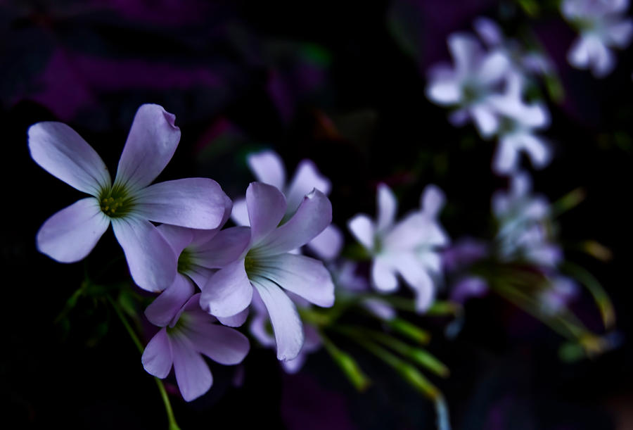 Night flowers by andashd on deviantart - Flowers that bloom only at night ...