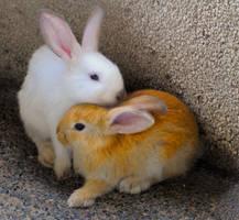 Bunny Warmth by kayellaneza