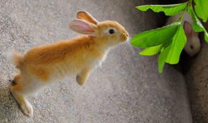 Rabbit Getting Food by kayellaneza