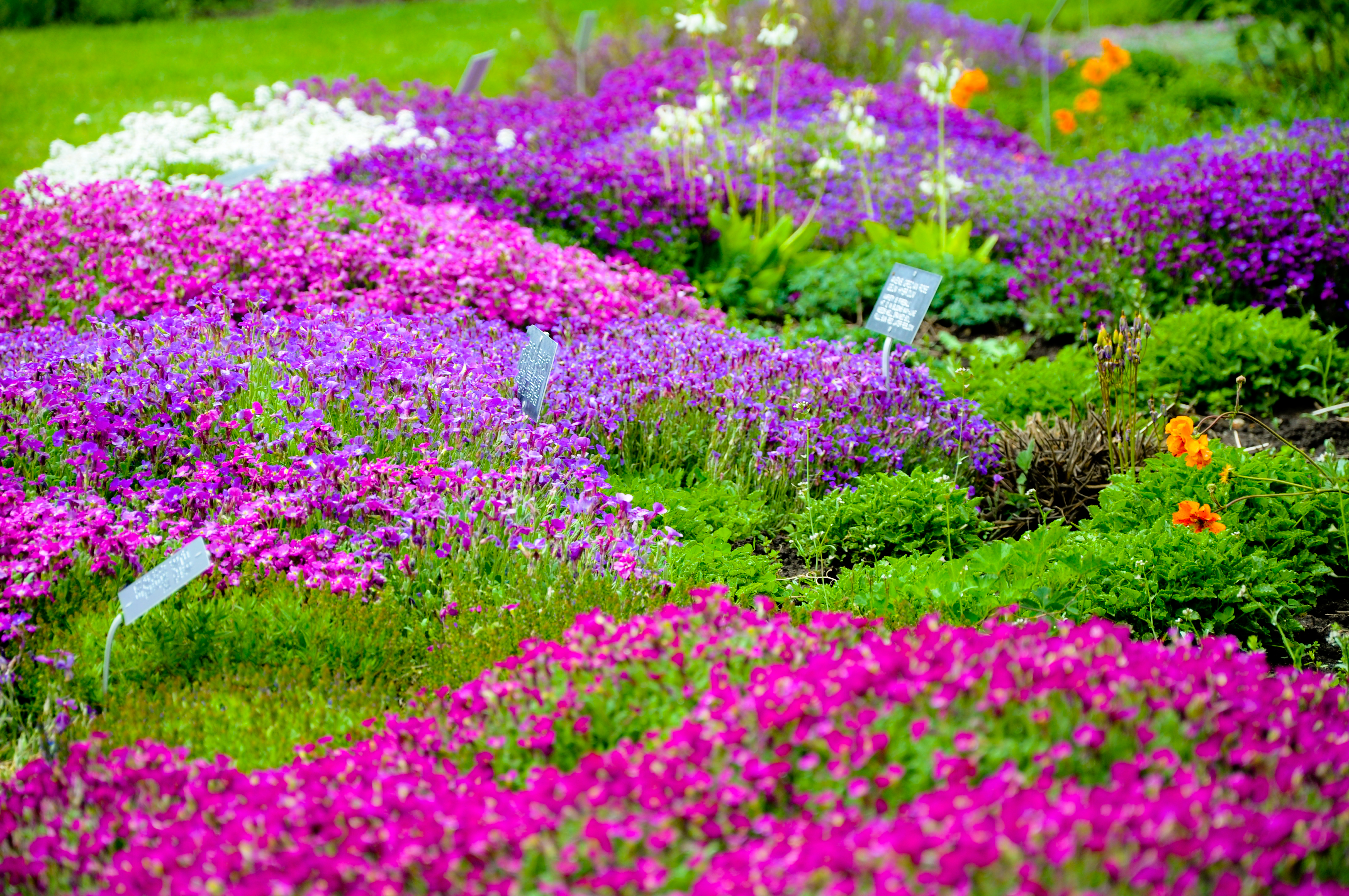 garden of flowers by kayellaneza on deviantart, Natural flower