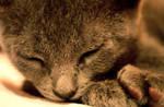 Sleepy by InstantesEternos