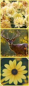 f2u - yellow deer divider