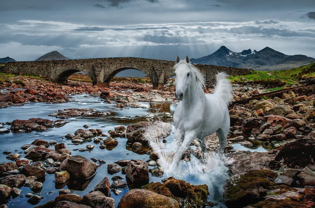 Gallop by KijaniKinyonga