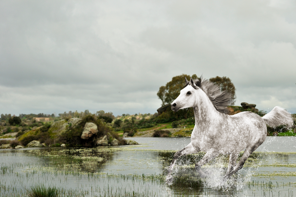 Galloping by KijaniKinyonga