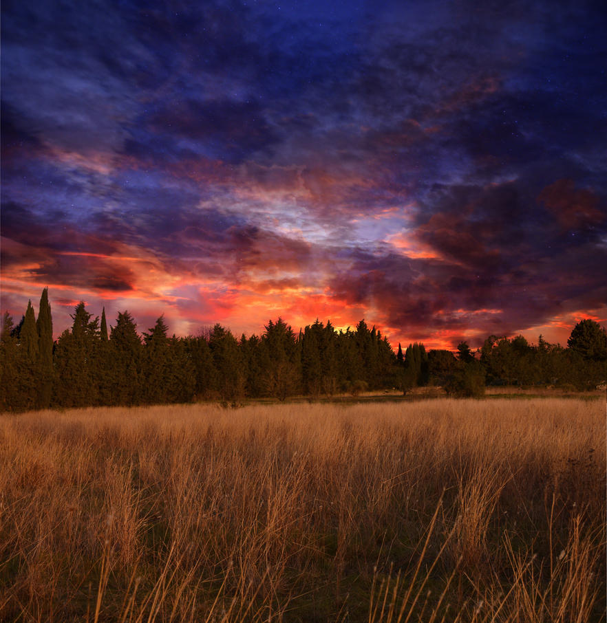 Forest At Dusk Wallpaper: Meadow At Sunset Premade Background STOCK By