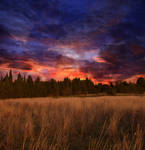 Meadow at Sunset Premade Background STOCK