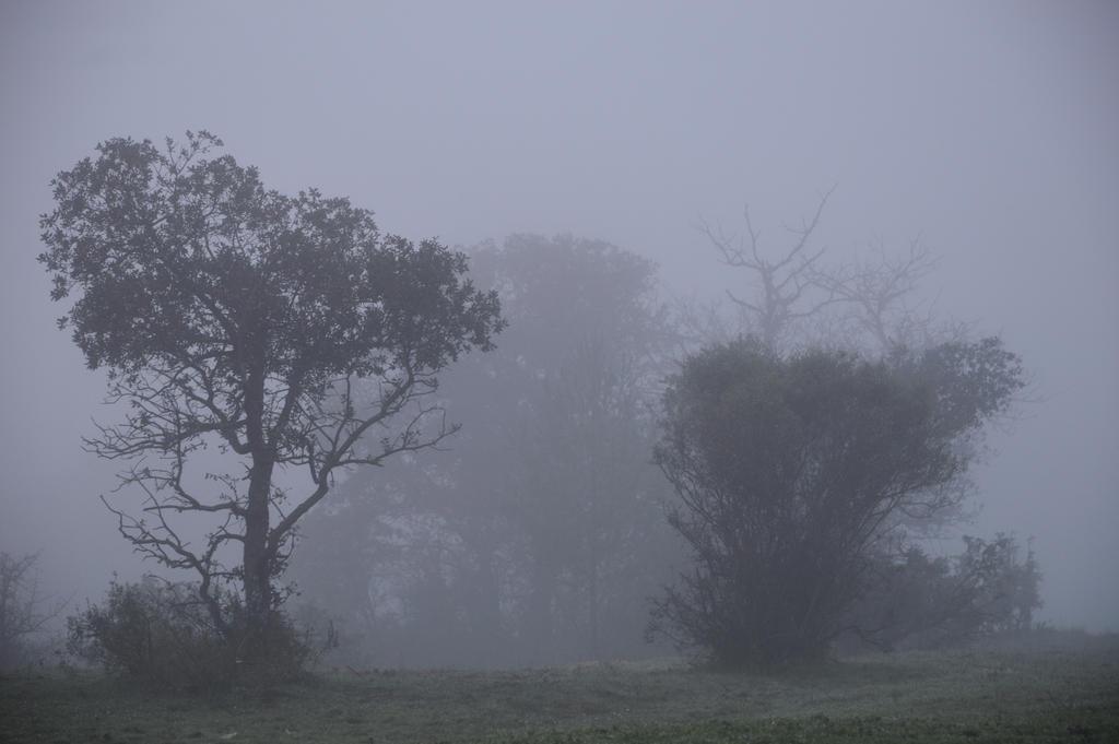 Fog Landscape STOCK
