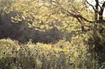 Sunlit Meadow STOCK