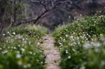 Fairy Path STOCK