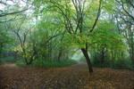 Misty Woods STOCK