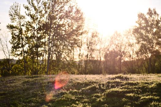 Sunset Field STOCK