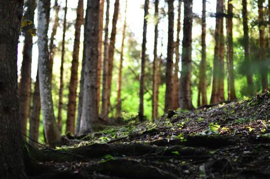 Woods STOCK