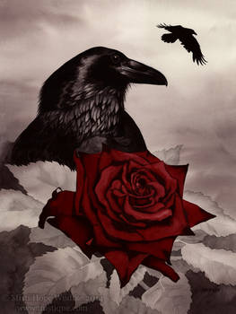 The Rose and the Raven