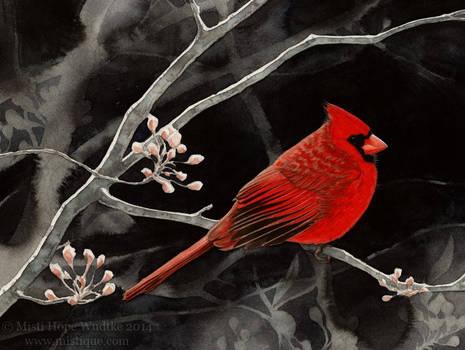 Dark Spring (Northern Cardinal)