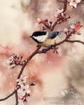 Spring Chickadee
