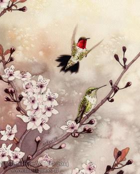 Spring Hummingbirds