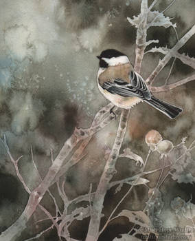 November Chickadee