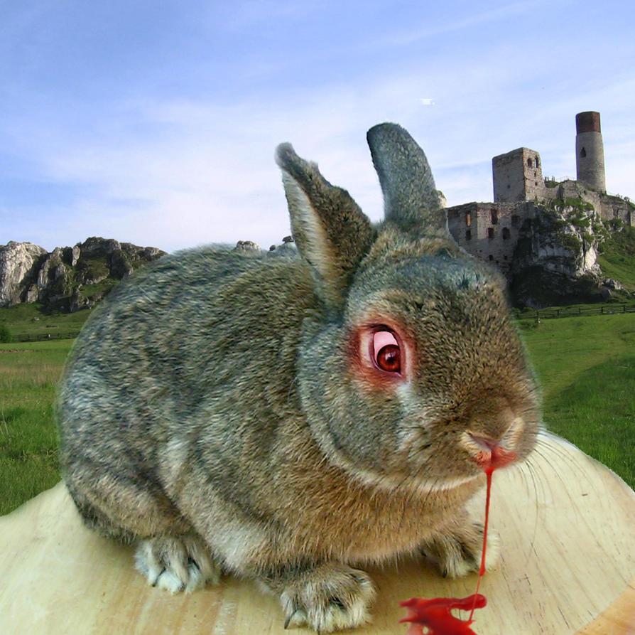 Картинки кроликов и зайцев смешные