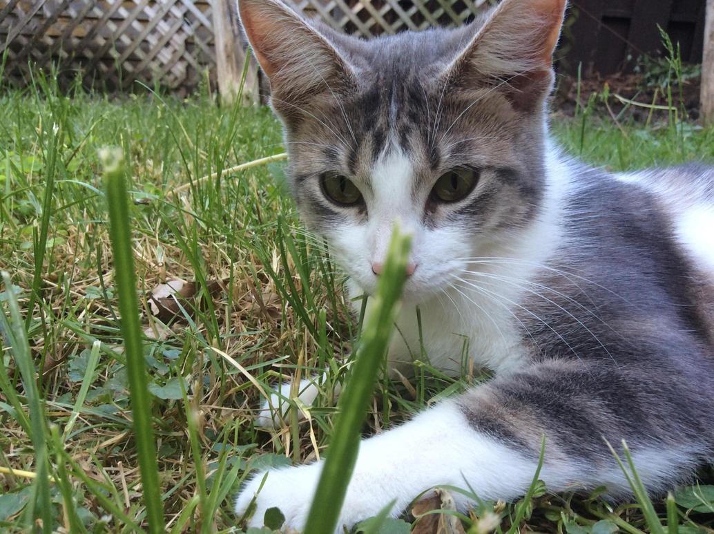A random kitty in meh yard by lux6283