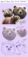 Bear Features Tutorial