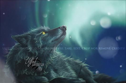 Wolf portrait - Northern lights