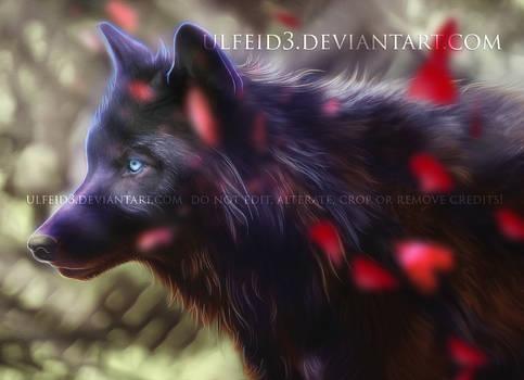 Wolf manipulation - Portrait