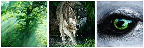 F2U - Forest Wolf Deco Divider