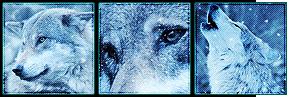 F2U - White Wolf Deco Divider by Ulfeid3