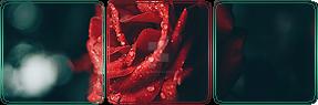 https://orig00.deviantart.net/699e/f/2018/249/4/3/f2u___red_rose_elegance_deco_divider_by_ulfeid3-dcm61u7.png
