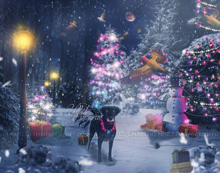 [COM] Katy - Christmas lights