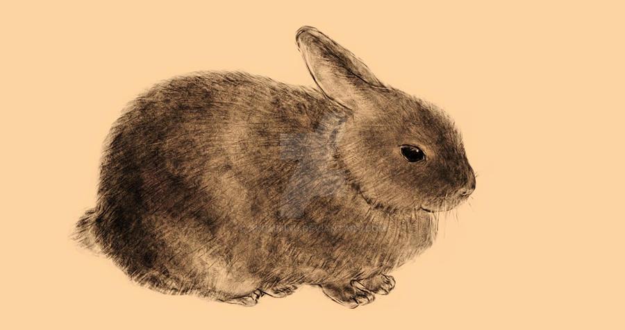 rabbit02 by ayumminu