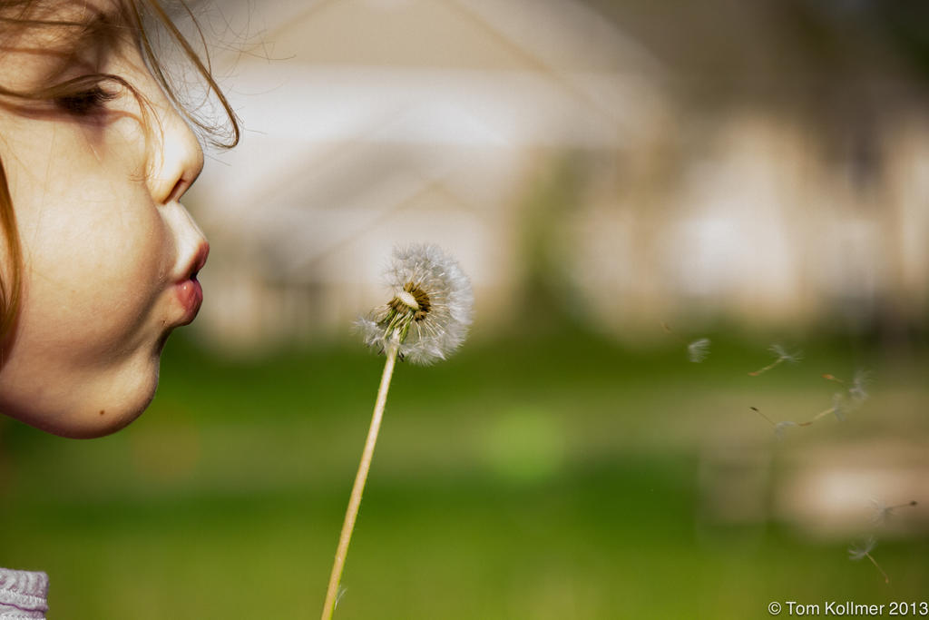 Dandelion Breeze by MonkeyBrainedImagery