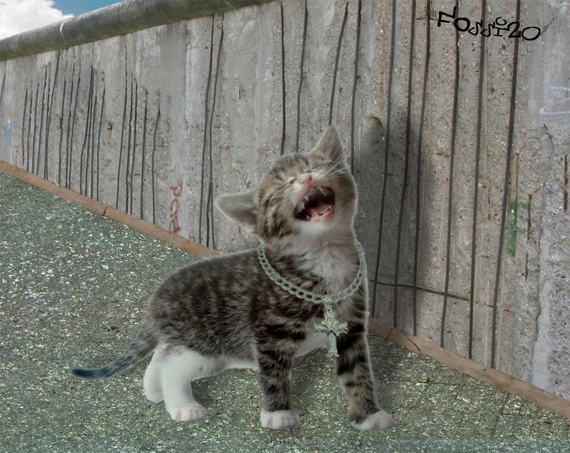 Hip Hop Cat By Fossi20 On Deviantart