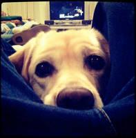 Lulu's Round Eyes