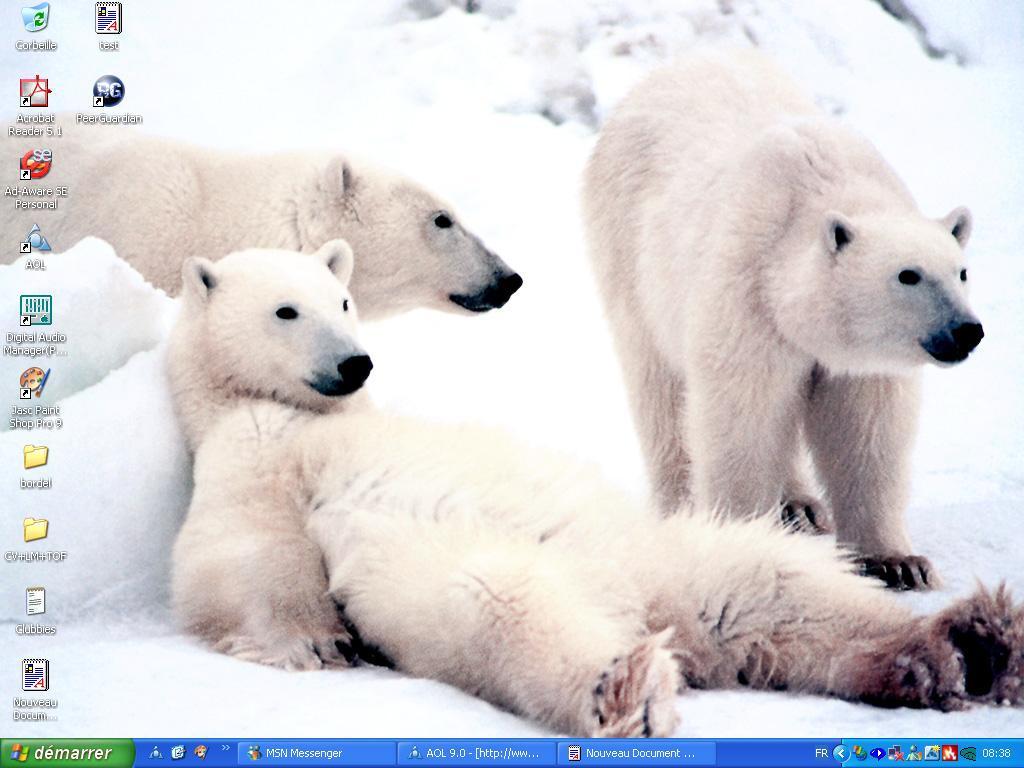 Bears Wallpaper by BearsLovers