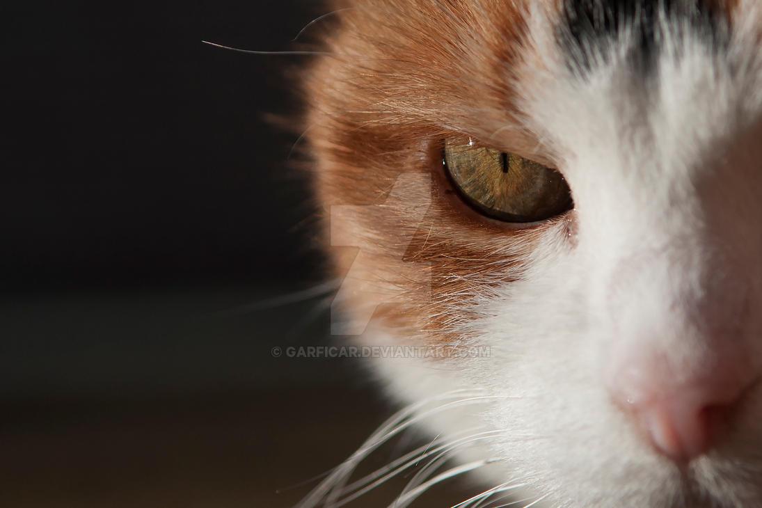 Musti's eye by Garficar