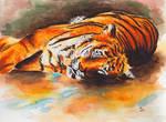 Tiger by jdmanny