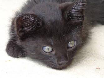 Black Kitten by JesusFreak87