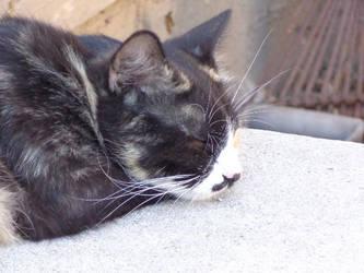 Mommy Cat Sleeping by JesusFreak87