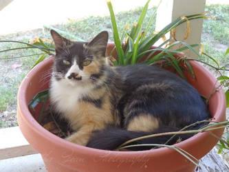 Cat In A Pot by JesusFreak87