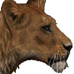 Lioness by Sambhur