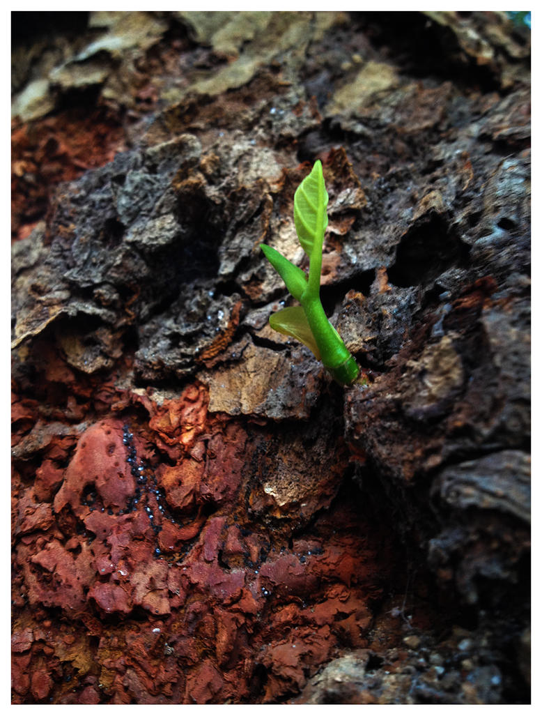 Life finds a way.. by SATTISH