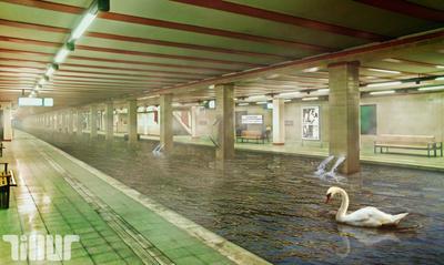 The last swan by TilluT