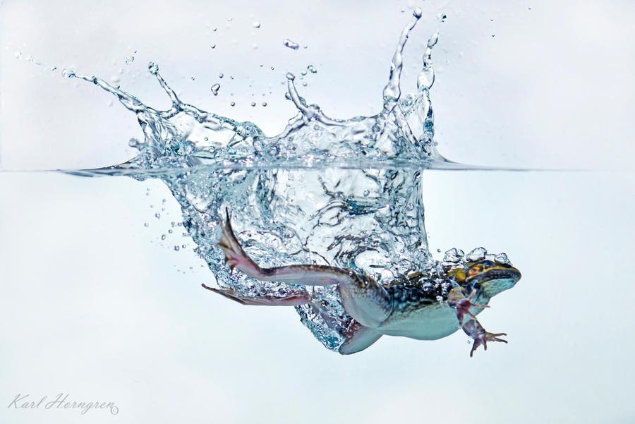 Splash Frog by karling69