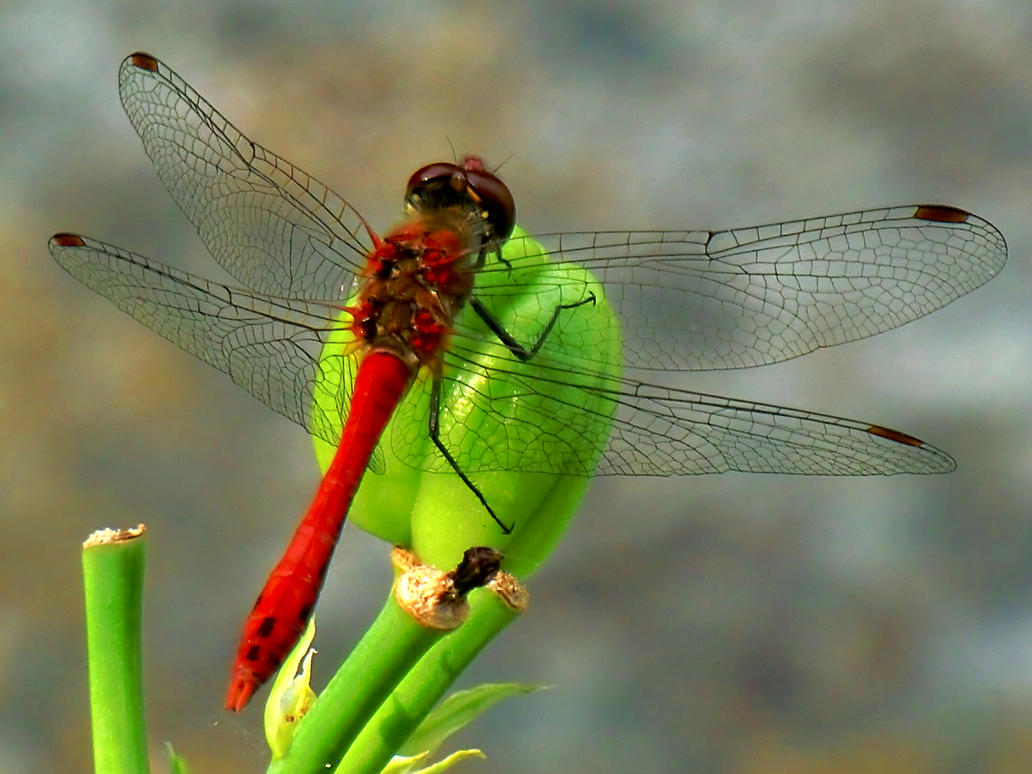 Dragonfly The Nature Trail S Six Feet Act Test Answers