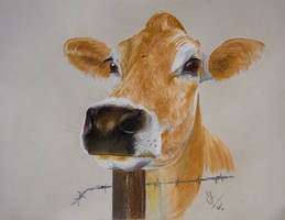 Jersey Cow by resistanceispointles