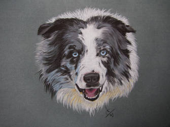 Collie Dog by resistanceispointles
