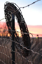 Barbed wire by mtmann101